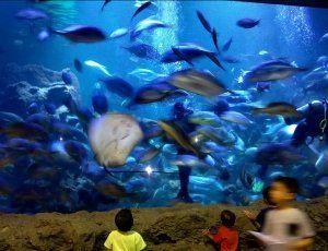 Океанариум Морской мир