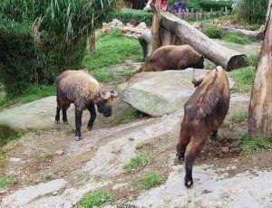 Зоопарк Taman Safari