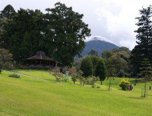 Фото Ботанический сад Cibodas