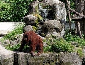 Зоопарк Хэппи Лока