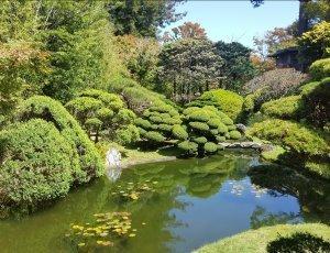 Японский сад «Джапанес Ти Гарден»