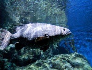 Океанариум «Sea Life»