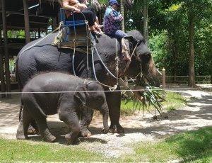 Сафари парк: Катание на слонах