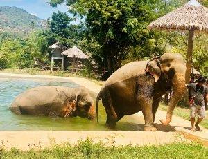 Слоновий заповедник