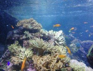 Аквариум и подводный зоопарк