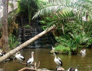 Фото Парк птиц на Бали