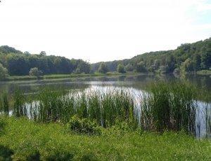 Голосеевский парк имени Максима Рыльского