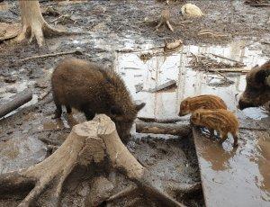 Зоокомплекс «Три медведя»