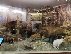Музей природы Карелии