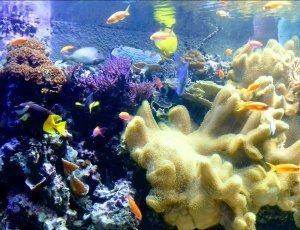 Фото Лондонский аквариум
