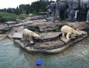 Зоопарк Торонто Зу