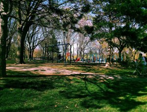 Парк Тринити Белвудс