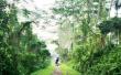Фото Природный заповедник Букит-Тимах 2