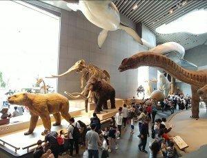 Шанхайский музей естественной истории