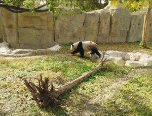 Шанхайский парк диких животных