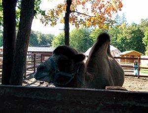 Зоопарк «Ковчег»