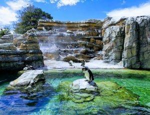 Зоопарк Вудленд Парк
