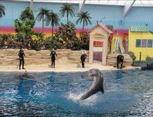 Зоопарк Брукфилда