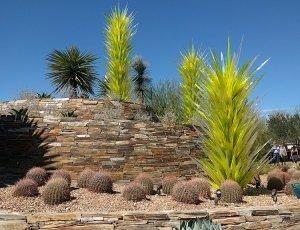 Пустынный ботанический сад города Финикс