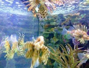 Аквариум с акульим рифом в заливе Мандалай