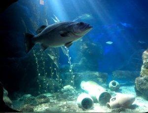 Фото Океанариум «Центры морской жизни»