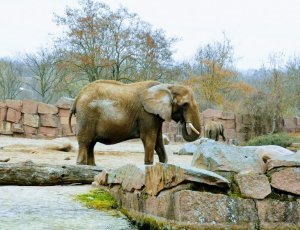 Зоопарк «Берлин»