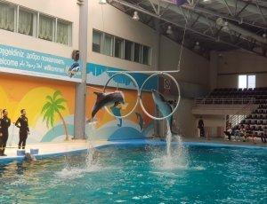 Стамбульский дельфинарий