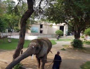 Лахорский зоопарк