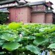 Фото Тайбэйский ботанический сад 5
