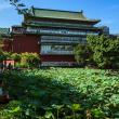 Фото Тайбэйский ботанический сад 9