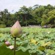 Фото Тайбэйский ботанический сад 4