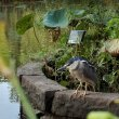 Фото Тайбэйский ботанический сад 6