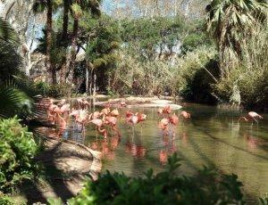 Зоологический парк Барселоны
