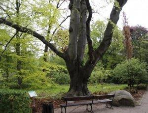 Ботанический сад Варшавского университета