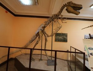 Музей эволюции Польской Академии Наук