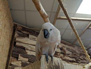 Папугарня