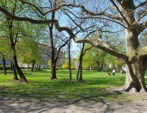 Парк имени Станислава Толпы