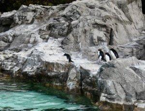 Токийский парк морской жизни «Tokyo Sea Life Park»