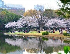 Фото Парк Китаномару