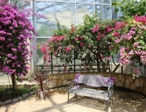 Ботанический сад Офуна