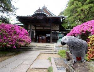 Фото Храм Anyoin