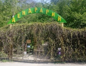 Дендрарий Красноармейского района