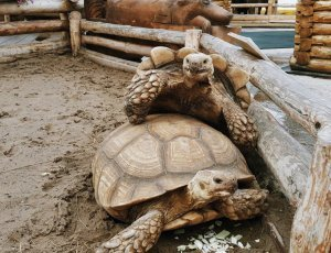 Удивительный зоопарк на Петербургской
