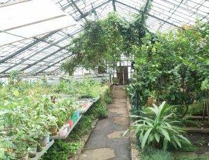 Ботанический сад Иркутского госуниверситета