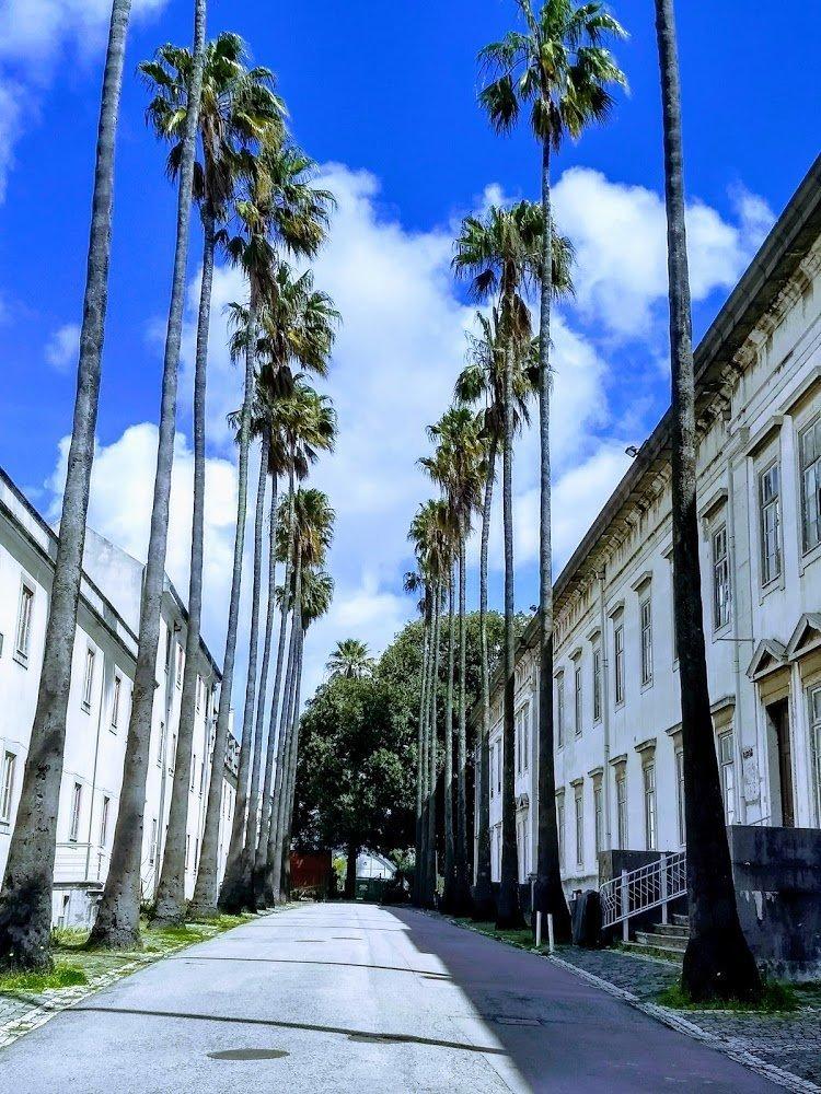 Лиссабонский ботанический сад: наследие мореплавателей - Ароидные ... | 1000x750