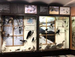 Музей природы и экологии Республики Беларусь