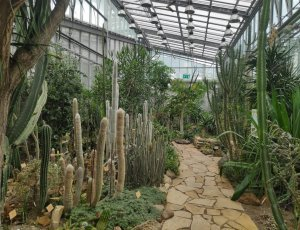 Таллиннский ботанический сад
