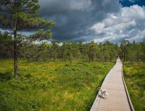 Фото Национальный парк Лахемаа