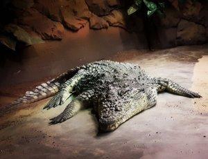 Тропический зоопарк «Тропикарио»