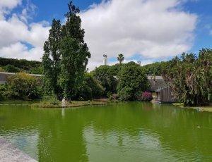Ботанический сад «Estufa Fria»